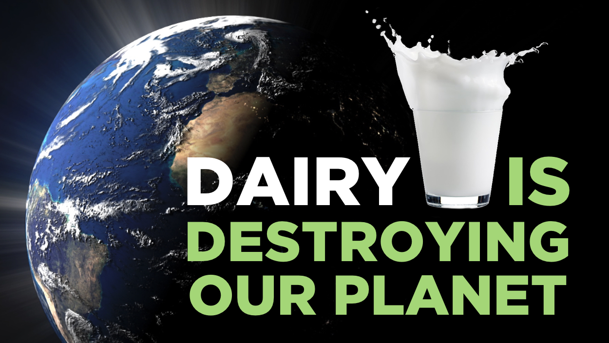 5 Ways Dairy Is Destroying The Environment