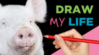 Draw My Life: A Pig's Life In Today's World