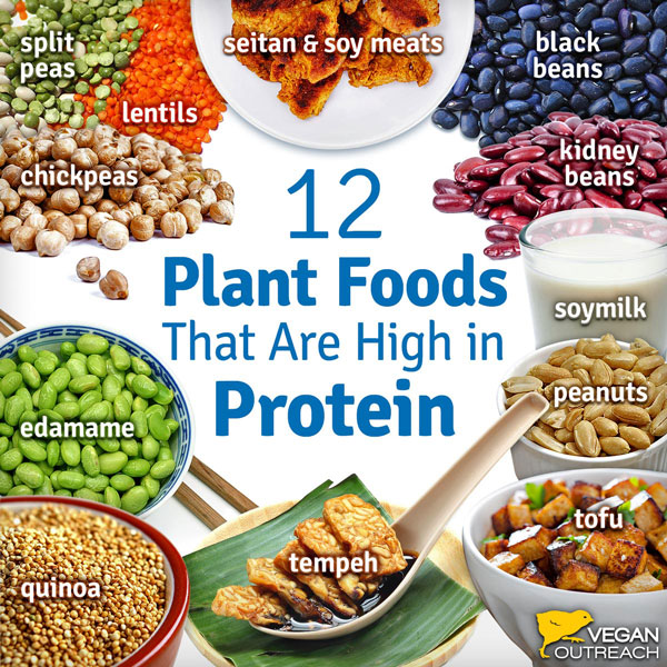 Vegan Protein Sources | WorldofVegan.com | #vegan #protein #vegetarian #health