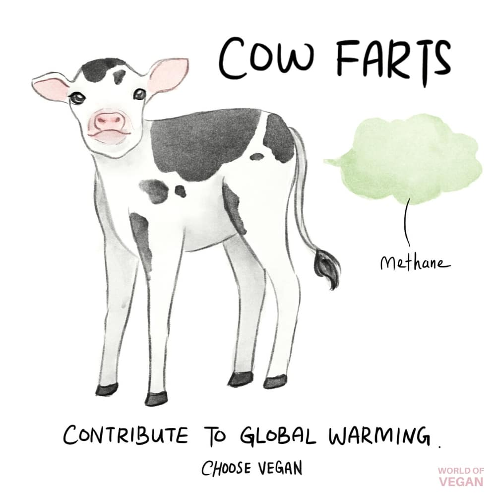 Do Cow Farts Cause Global Warming? | World of Vegan